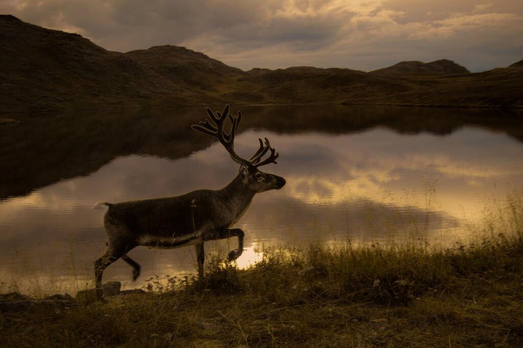 Noordkaap in Noorwegen - Wild Life