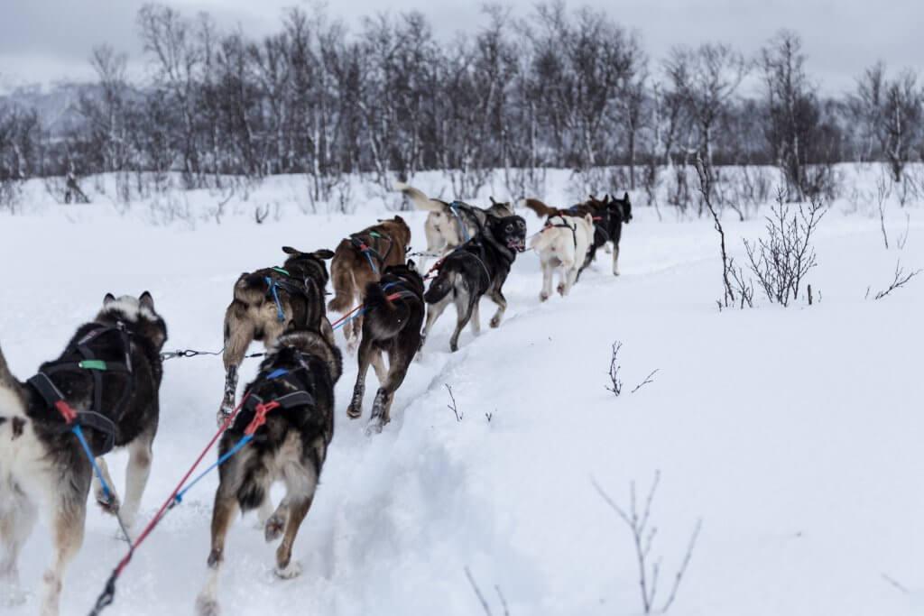 Wintersport vakantie naar Tromso in Noorwegen