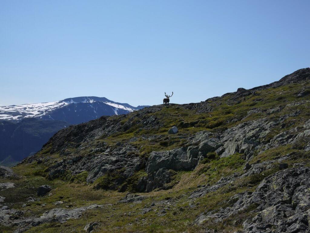 Wandelvakantie Jotunheimen Noorwegen met SNP